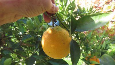 Κάποτε για ένα πορτοκάλι σου έκαναν μήνυση!