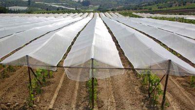 Η υπουργική επιβεβαίωση για τα 15 εκ. ευρώ που θα διατεθούν στους αγρότες - Σε ποιες καλλιέργειες