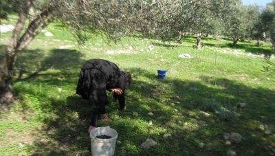 Τα κοκολόγια – Η Παράδοση που δείχνει το αθάνατο μεγαλείο του Ελληνισμού.
