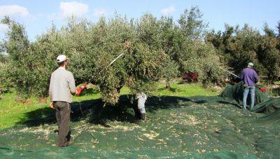 Ηρακλειώτης στο newshub.gr: «Αν πάω για ελιές με την οικογένεια μου θα φάω πρόστιμο»