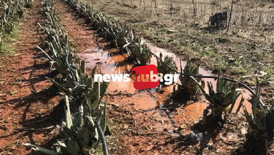 Ηράκλειο: Ασύλληπτη καταστροφή στις καλλιέργειες! (φωτογραφίες)