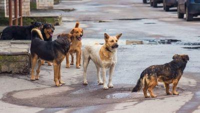Χρηματοδότηση για τη διαχείριση των αδέσποτων ζώων-Ποιοι δήμοι της Κρήτης εντάσσονται