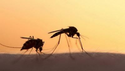 Με χρήση drones η καταπολέμηση των κουνουπιών...
