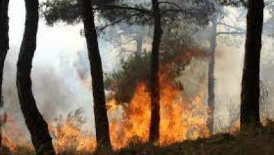 Μεγάλη πυρκαγιά κοντά στις Μάλλες Ιεράπετρας