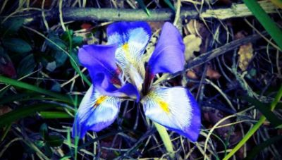 Ποια αγρια φυτά μπορούν να προβλέψουν τη βαρυχειμωνιά;