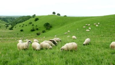 Νομοσχέδιο φερνει αλλαγές στον κλάδο της κτηνοτροφίας – Τι θα περιλαμβάνει