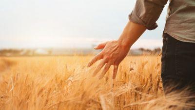 Νέοι Αγρότες: Τα 4 φορολογικά οφέλη, η μείωση προκαταβολής φόρου και η απαλλαγή από το τέλος επιτηδεύματος