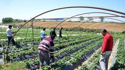 Δήμος Οροπεδίου Λασιθίου: Rapid test στους αλλοδαπούς εργάτες γης