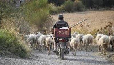 Κρήτη: Συνέλαβαν κτηνοτρόφο, επειδή το ζώο του προκάλεσε ζημιές σε αγροτική περιοχή