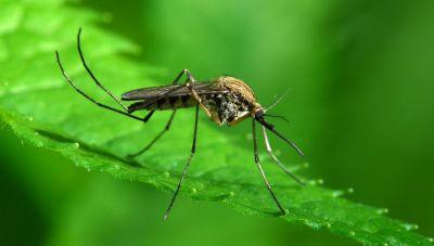 Το πρόγραμμα των συνεργείων καταπολέμησης κουνουπιών στα Χανιά