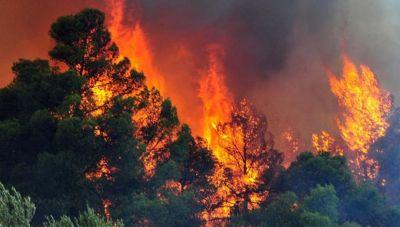 Πως θα αποφύγουμε τις καταστροφικές πυρκαγιές: Τι λένε οι ειδικοί