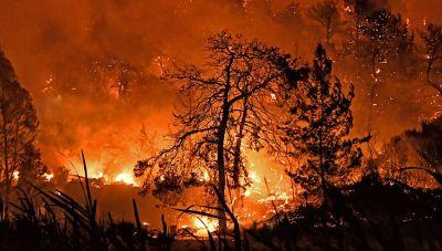 Σε ύφεση η μεγάλη πυρκαγιά στο Σχίνο Κορινθίας