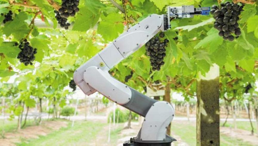 Σε νέα εποχή ο τρύγος: Περνά στα... ρομπότ