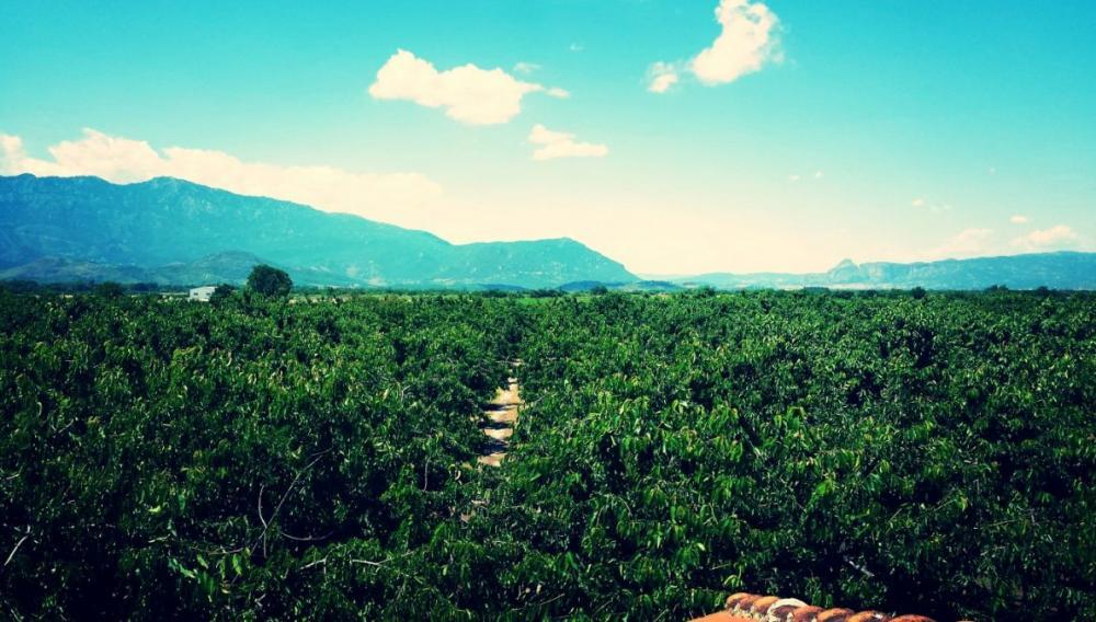 Δημιουργία πρότυπων αγροκτημάτων σε καθε περιφέρεια