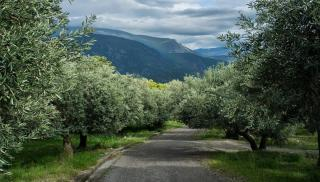 Θέμα newshub.gr: Αποζημιώσεις για την χαμένη παραγωγή και στήριξη του λαδιού