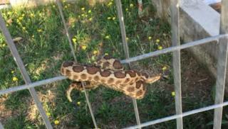 Φίδι σκόρπισε τρόμο σε παιδική χαρά!