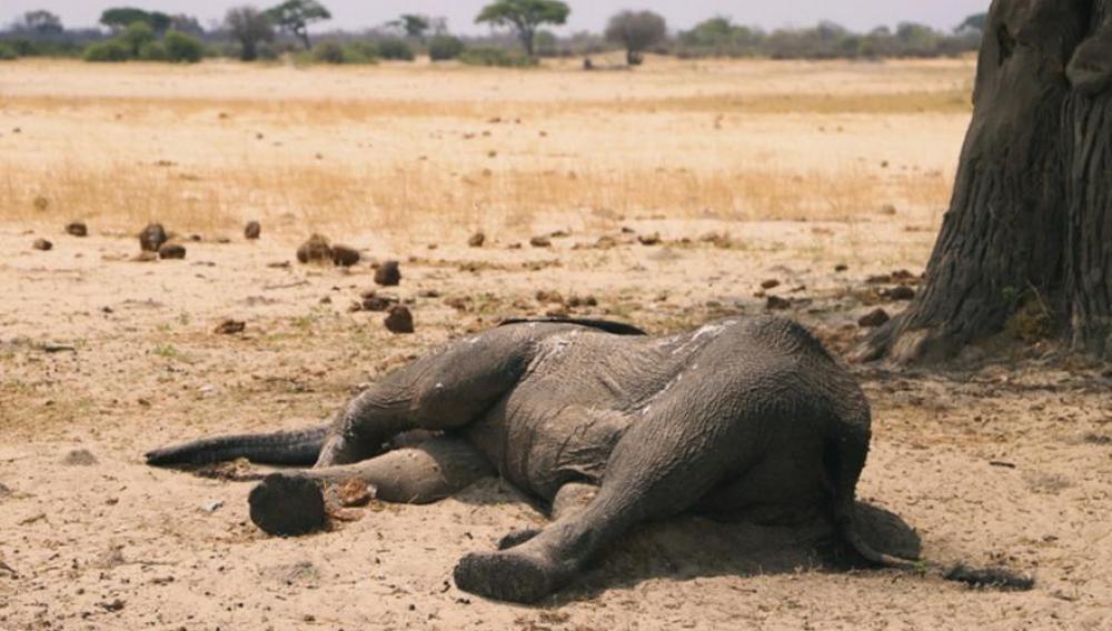 Μποτσουάνα: Τι ακριβώς σκότωσε τους 275 ελέφαντες - Διεθνής κατακραυγή