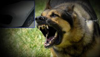 Ηράκλειο: Άγριος σκύλος προκάλεσε υλικές ζημιές σε... αυτοκίνητο! (φωτογραφίες)