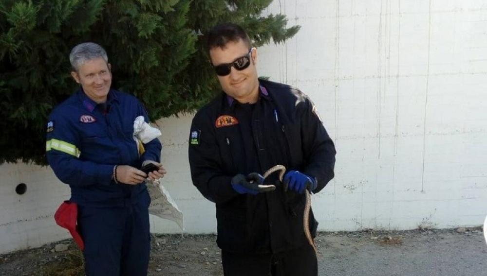Κρήτη: Το φίδι σε σχολείο κινητοποιησε την Πυροσβεστική!