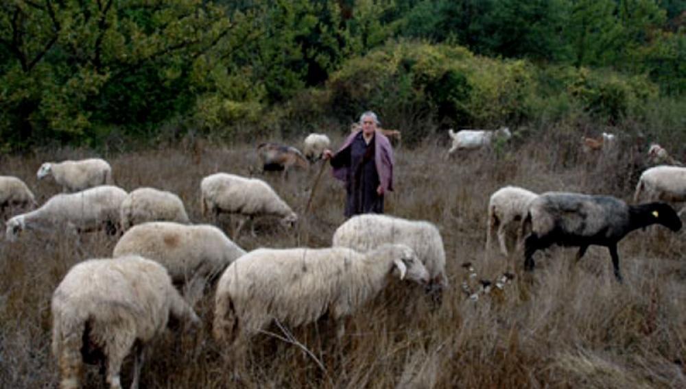 Θέμα newshub.gr: Απειλούνται επεισόδια - Απειλές και ύβρεις σε αγρότες από βοσκούς!