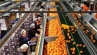 Η πανδημία ενίσχυσε τον κλάδο των τροφίμων