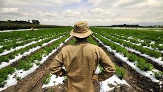 Κρήτη: Την Τετάρτη πληρώνεται το 35% των αποζημιώσεων του ΕΛΓΑ στους αγρότες!