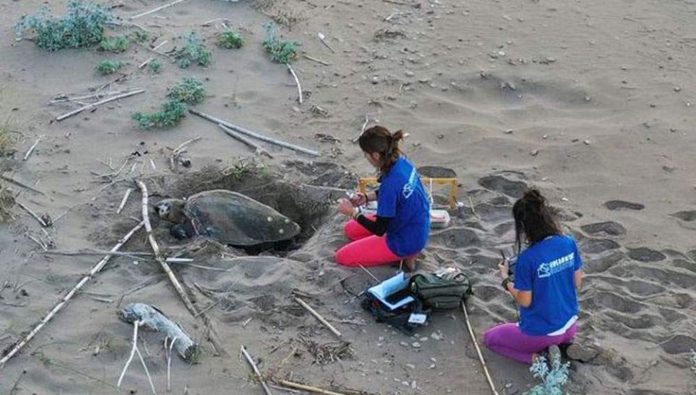 Αυξήθηκαν οι φωλιές των χελωνών καρέτα καρέτα (φωτογραφιες)