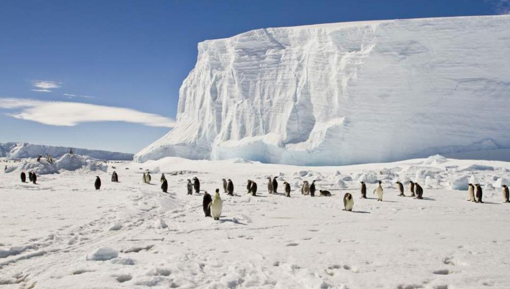 Ανταρκτική: Νέες αποικίες αυτοκρατορικών πιγκουίνων ανακαλύφθηκαν από δορυφόρο