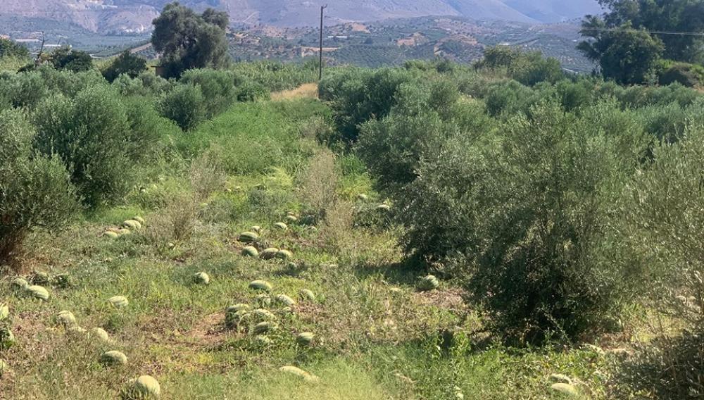 Θέμα newshub.gr: Εγκαταλελειμμένα μποστάνια στην ενδοχώρα του Ηρακλείου (φωτογραφίες)