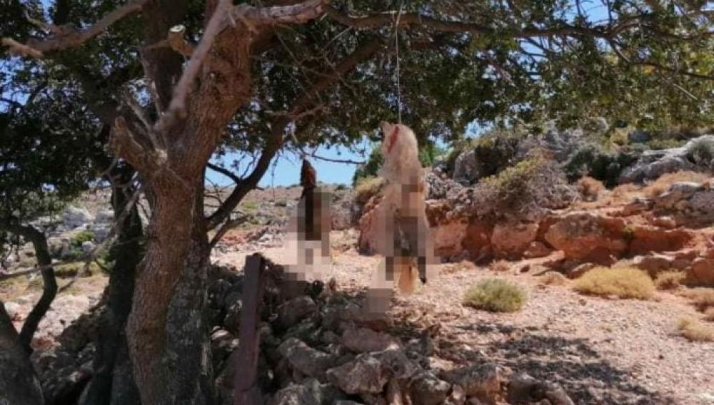 Κρήτη: Ανθρωποκυνηγητό για το... σφαγέα των σκύλων