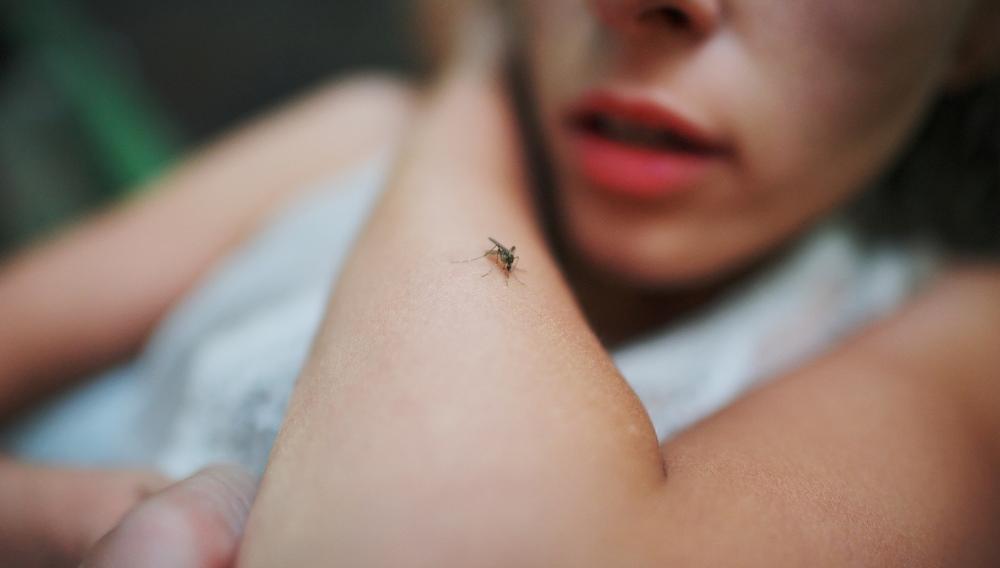 Που θα γίνουν την ερχόμενη εβδομάδα οι ψεκασμοί για τα κουνούπια στα Χανιά