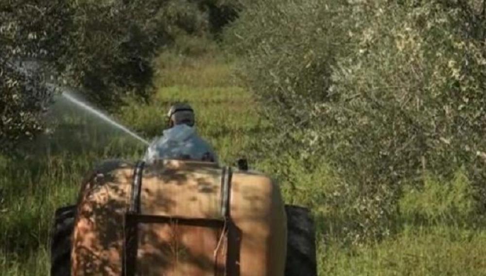 Δάκος: Νέοι ψεκασμοί στους Δήμους Αρχανών Αστερουσίων, Γόρτυνας και Φαιστού
