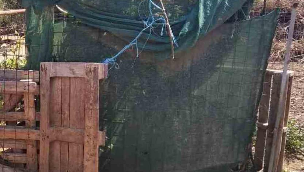 Κρήτη: Καλλιεργούσε τα δενδρύλλια στην αυλή του σπιτιού του