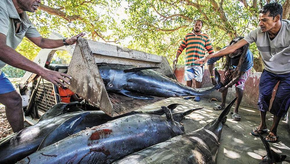 Εντόπισαν νεκρά δελφίνια ...