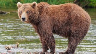 Αρκούδες έσυραν στο κλουβί τους 11χρονο και τον κατασπάραξαν