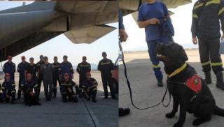 12 Έλληνες και 1 σκύλος στην πρώτη γραμμή διάσωσης στην Βηρυτό