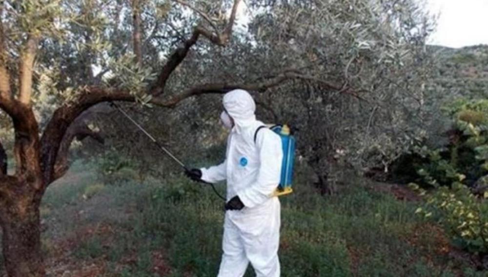 Ψεκασμοί δακοκτονίας στους Δήμους Ηρακλείου και Γόρτυνας