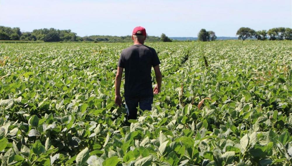 Καταγγελίες: Ο Γολγοθάς χιλιάδων αγροτών στην Κρήτη λόγω... δυσλειτουργίας του συστήματος