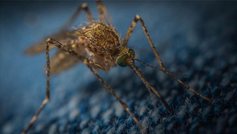 Δέκα κρούσματα από τον ιό Δυτικού Νείλου και ένας θάνατος στην Ελλάδα