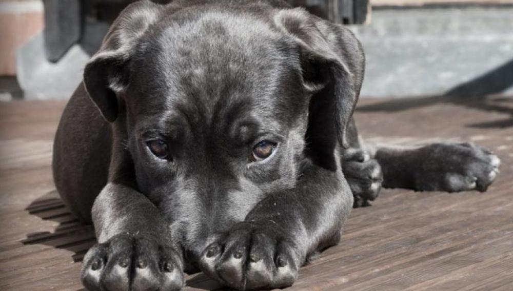 Κρήτη: «Η βία και η κακοποίηση των ζώων είναι κλιμακούμενη»