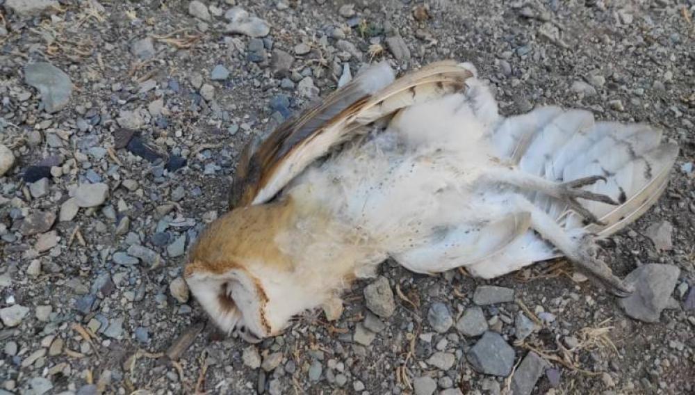 Κρήτη: Τα δηλητήρια «θερίζουν» τα αρπακτικά πτηνά στα «Λιβάδια»