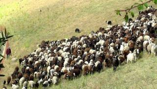 Στους λογαριασμούς των κτηνοτρόφων τα 30 εκ. ευρώ - Ξεκίνησε η καταβολη