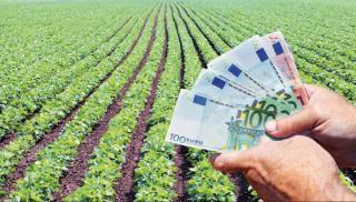 Ηράκλειο: Πληρώνονται το 50% των χρημάτων τους οι αμπελουργοί - Η ανακοίνωση της ΕΑΣΗ