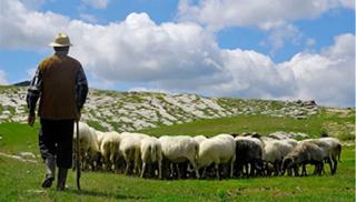 Μετά την πληρωμή: Τα ποσά που προκάλεσαν δυσφορία στους κτηνοτρόφους