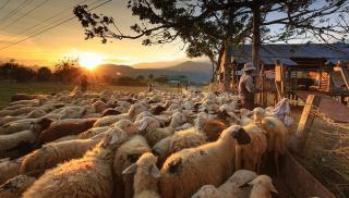 Χιλιάδες κτηνοτρόφοι εκτός ενίσχυσης!