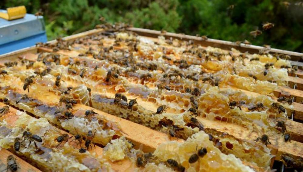 «Μέτρα στήριξης της Μελισσοτροφίας και προστασίας της Ελληνικής Παραγωγής».