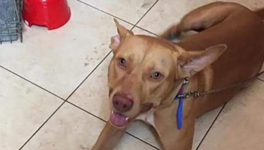 Χανιά: Εμφανίστηκε στο Αστυνομικό Μέγαρο ο 55χρονος που βασάνισε τον σκύλο του