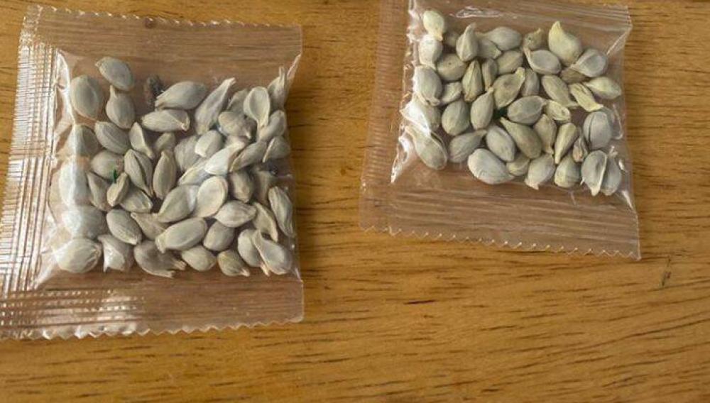 Κρήτη: Συναγερμός για σπόρους που έρχονται από την Ασία και ιδιαίτερα την Κίνα!