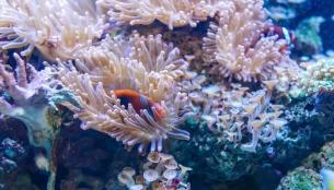 Δημιουργήθηκε ένα πρωτότυπο fund για την προστασία των κοραλλιογενών υφάλων από τον ΟΗΕ