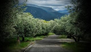 Χαοτική διαφορά: Η Ελλάδα δίνει 104 εκ. ευρώ σε όλους τους αγρότες και η Ιταλία 140 εκ. ευρώ μόνο στους ελαιοπαραγωγούς!